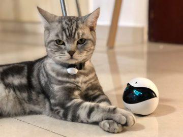 Ebo - Il robot Intelligente per gatti