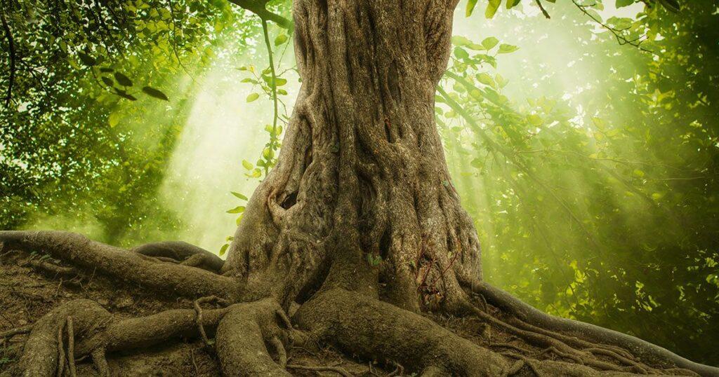 Immagine Radici Esempio Root